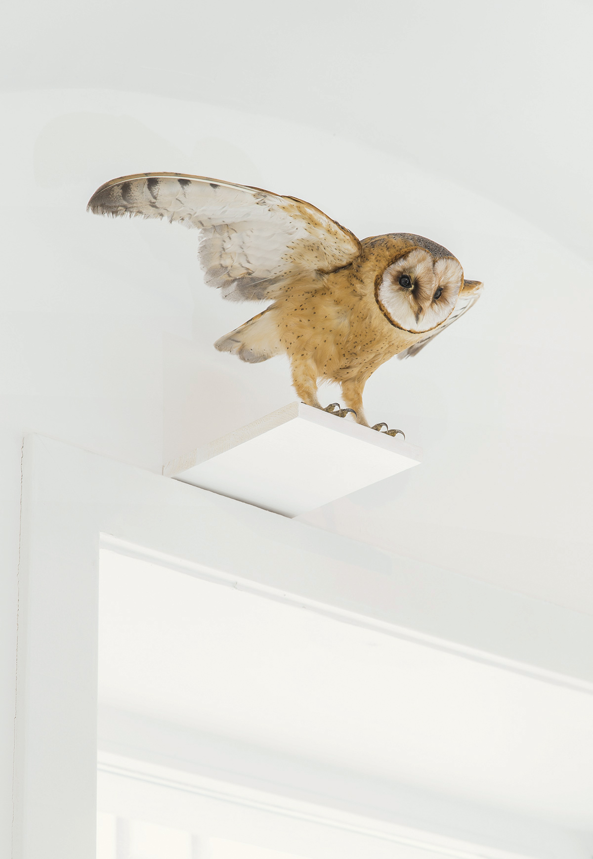2dd21fb1 Ádám Albert: Nightwatch of Anxiety #1, 2017, prepared barn owl, ca. 20 × 30  × 20 cm | photo: Gábor Arion Kudász